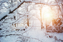 Winter In The Garden. All Tree...