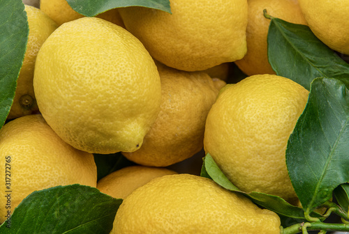 Close view of fresh yellow lemons with green leaves background Tableau sur Toile