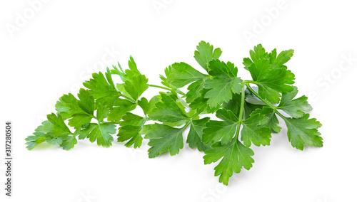 parsley isolated on white background Fototapet