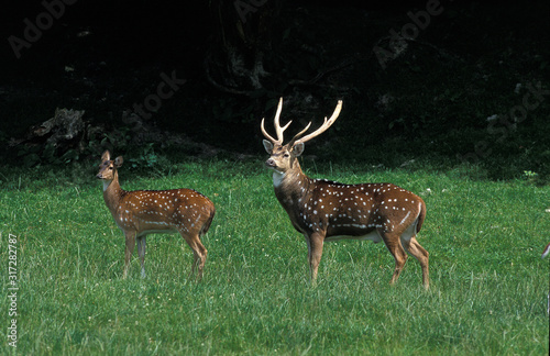 Photo CERF AXIS axis axis