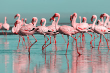 Wild African Birds. Group Bird...