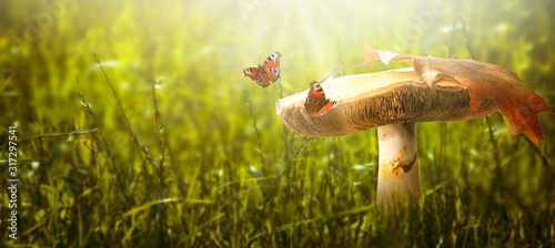 Fototapeta Magical fantasy large mushroom on enchanted fairy tale glade with fabulous fairytale peacock eye butterflies on mysterious green grass background and shiny glowing sun rays in the morning obraz