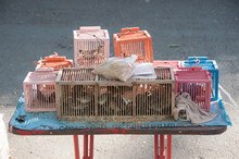 Poor Birds In Cages For Sale T...