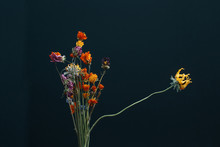 Dried Flower Bouquet, Loneliness