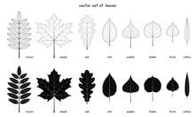 Vector Set Of Autumn Leaves. E...