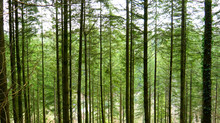 View Through The Forest On A C...