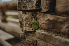 Old Stone Brick