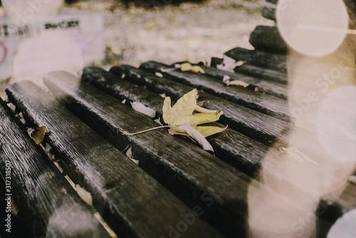 Fotografering Foglia gialla