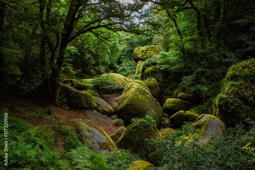 La forêt de Huelgoat Billede på lærred