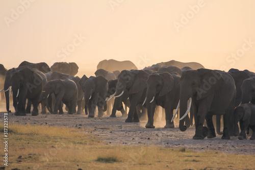 Photo Familia elefantes en safari de Kenia