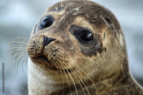 Foto scotland wildlife beach photography seal