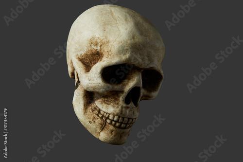 Fake Real Looking Human Skull Canvas Print