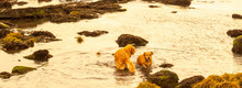 Dogs Playing In A Rockpool