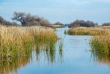 USA, California, Kern County, Kern National Wildlife Refuge. Duck Habitat Between Reeds At This Scenic Waterway In The San Joaquin Valley