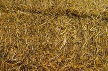 Hay Bale From Freshly Cut Wheat.