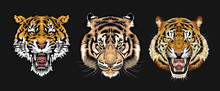 Tiger Vector Set Collection Gr...