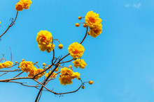Yellow Flowers On Background Of Blue Sky