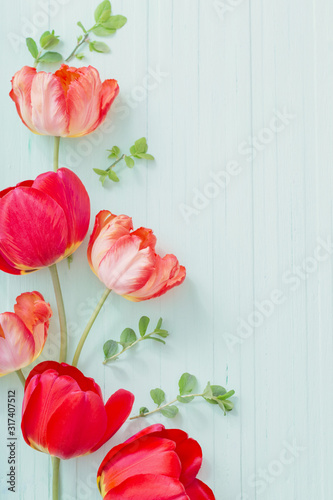 Obraz red tulips on green wooden background - fototapety do salonu