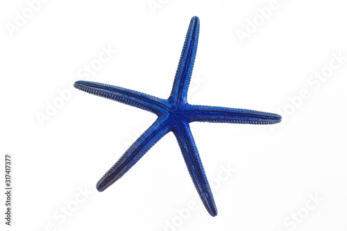 Photo Isolated blue starfish on white background