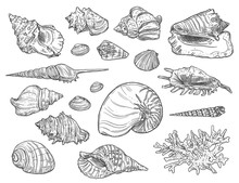 Seashells And Corals. Vector I...