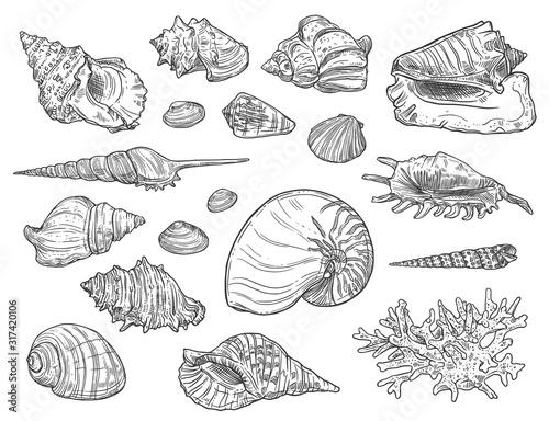 Fotomural Seashells and corals