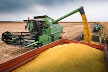 Combine Transferring Soybeans ...