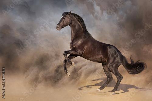 Black stallion rearing up in desert dust