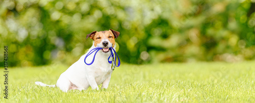 Obraz Concept of dog walking and pet sitting with dog holding leash in mouth - fototapety do salonu