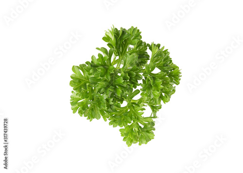 Fotomural  Fresh parsley leaves isolated on white background