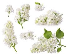 Set Of Blooming Lilac. Branches Of Lilac Flowers Isolated On White Background.