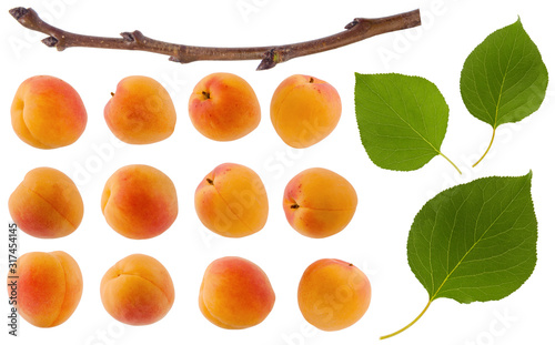 Isolated apricot Canvas-taulu