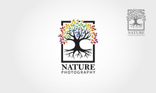 Nature Photography Logo Template. Illustration Rainbow Tree Clean And Modern Style On White Background.