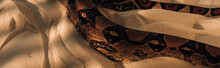 Panoramic Shot Of Snake With S...