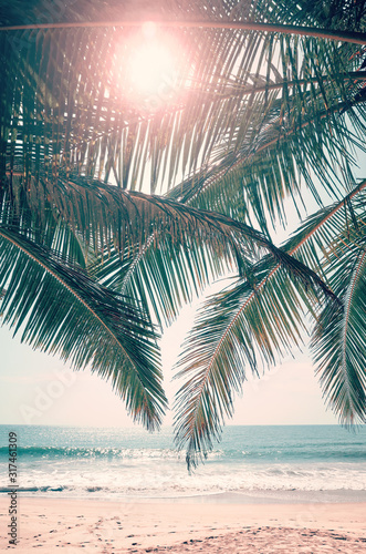 Fototapeta Sun shines through palm leaves, retro color toned picture. obraz