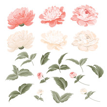 Set Of Peonies Flowers Elements. Collection Of Peony Isolated On White Background. Bouquet Of Peonies. Flower Isolated Against White. Beautiful Set Of Flowers. Vector Illustration.