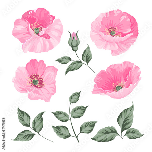 Vintage poppy set. Wedding flowers bundle. Flower collection of watercolor detailed hand drawn poppies. Red poppies collection. Vector illustration. - 317470353