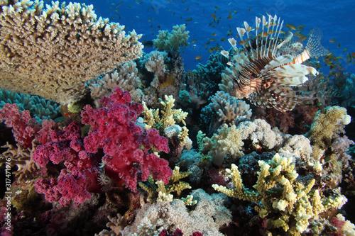 Coral Reef Saudi Arabia