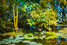 Pond With Water Lilies And Aquatic Plants In A Greenhouse.