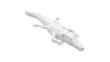 3D Rendering Of An Alligator I...