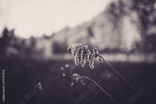 Beautiful tall plant with bokeh in black and white Canvas Print