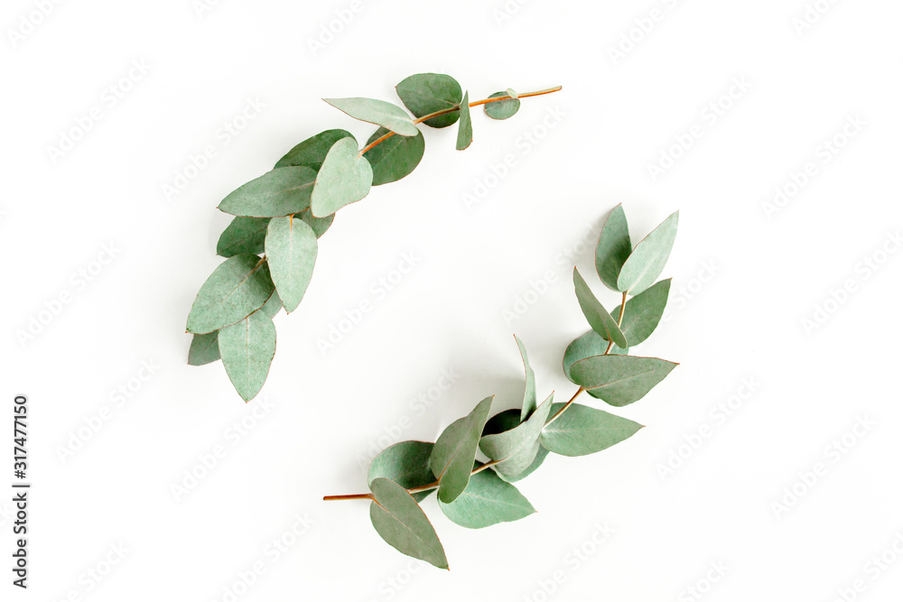 Fototapeta Wreath frame made of branches eucalyptus and leaves isolated on white background. lay flat, top view