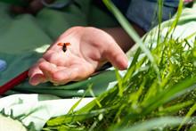 Little Beautiful Ladybug Takes...