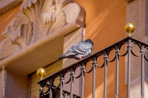 Photo Sant Cugat del Valles , Barcelona, Catalonia/spain, The city that was born aroun