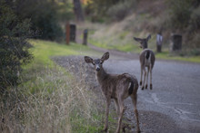 Deer Walking On A Forest Path