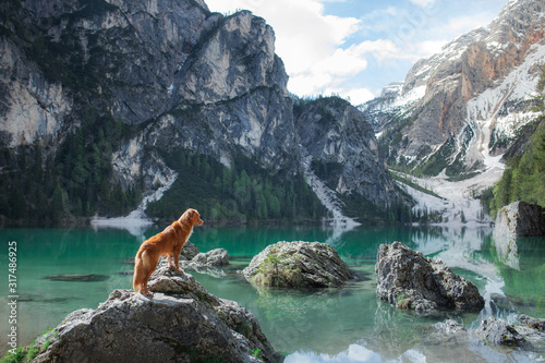 dog by the mountain lake Fototapet