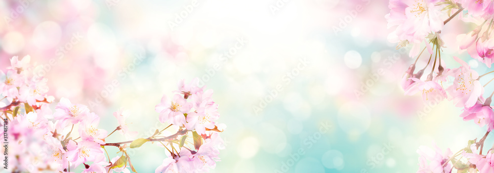 Fototapeta Pink cherry tree blossom flowers blooming in spring, easter time against a natural sunny blurred garden banner background of blue, yellow and white bokeh.