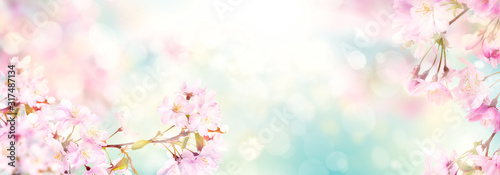 Obraz Pink cherry tree blossom flowers blooming in spring, easter time against a natural sunny blurred garden banner background of blue, yellow and white bokeh. - fototapety do salonu
