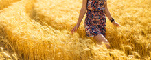 Girl Walking Through The Gold Field And Touching A Wheat With Her Hand