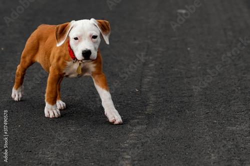 Cute puppy crossbreed dog on grey background. Canvas Print