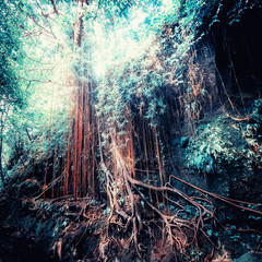 Panel Szklany Natura Fantasy tropical jungle forest in surreal colors. Concept landscape